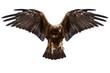 eagle, isolated