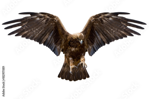 Deurstickers Eagle eagle, isolated