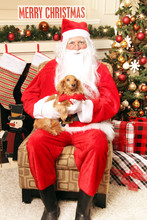 Santa Claus Holding A Pet Dach...