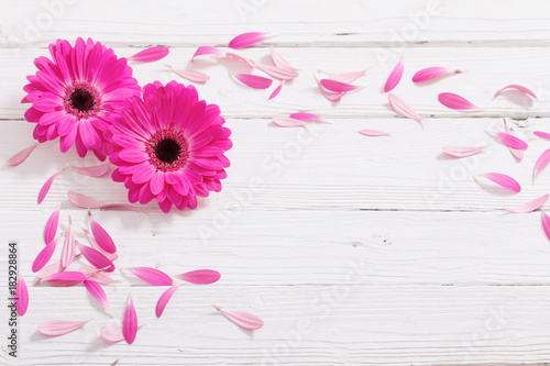 Tuinposter Gerbera pink gerber on white wooden background