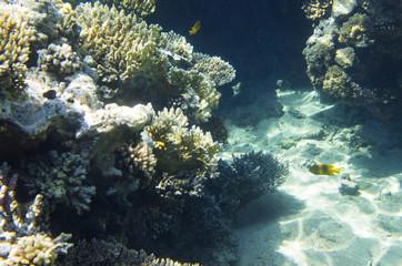 Coral rocks on the sandy bottom