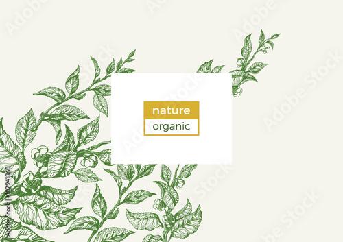 Foto  Vector nature template. Vintage floral illustration