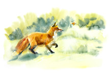 Red Fox Playing With Butterfly...