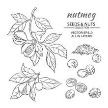 Nutmeg Vector Set