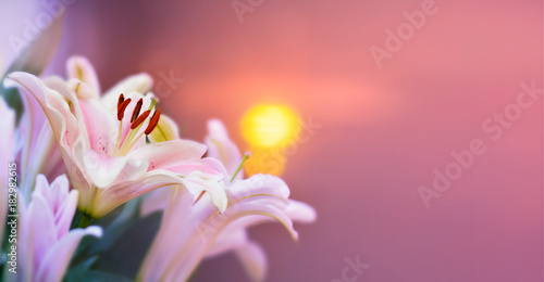 Poster de jardin Nénuphars Pink lilly in the garden and tone color pink,Lilly flowers (shallow dof) Natural Banner