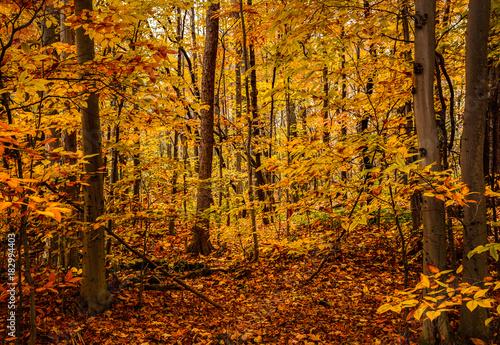 Foto op Plexiglas Oranje September Forests