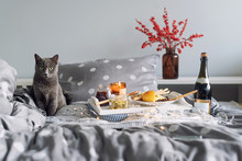 Breakfast In Bed, A Tray With Cheese, Grissini, Jam From Young Fir Cones, Champagne And A Candle. Gray Cat In Bed. Christmas Morning. Honeymoon. No People.