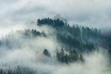 mglisty krajobraz lasu