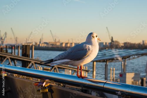 Möwe guckt auf Hamburger Hafen