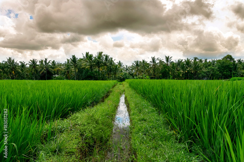 Photo  the middle way on the rice field, indonesia, bali