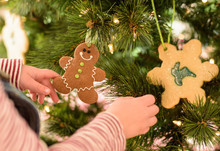 Young Child Hanging Gingerbread Man Ornament On The Christmas Tree