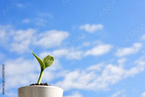 фотография  新芽と青空