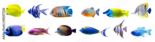 Spoed Foto op Canvas Onder water Tropical fish collection isolated on white