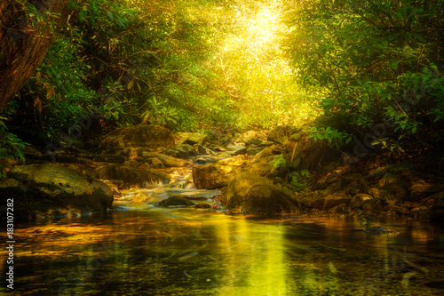 Fotografie, Obraz  Sun rays burst through forest foliage along Verkeerde Kill in Minnewaska reserve
