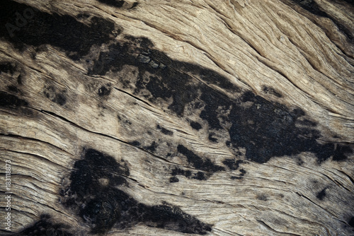Photo Stands Firewood texture Burnt wood texture
