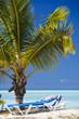 Young Palm Tree On Caribbean Beach, Antigua