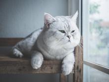 Cute Short Hair Cat Looking Ou...