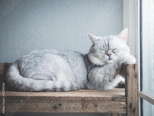 Naklejki koty   slodki-kot-spi-na-drewnianej-polce-w-swietle-z-okna