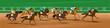 Horse racing, Racecourse, Jockey