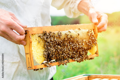 Photo Beekeeper holding a honeycomb full of bees