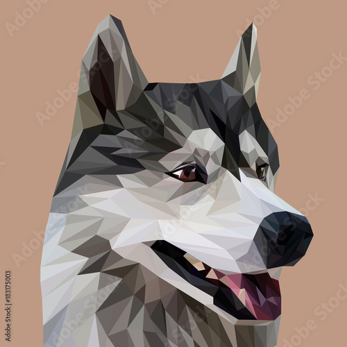 Fototapeta Husky low poly design. Triangle vector illustration.