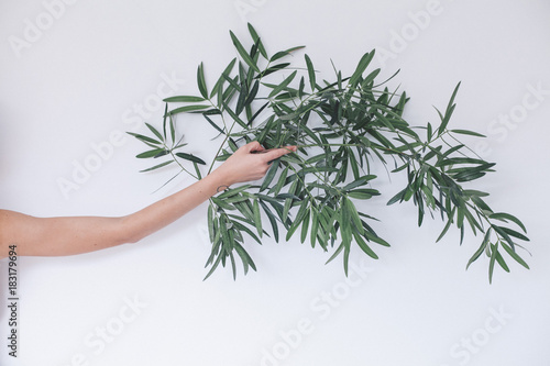 La pose en embrasure Oliviers girl's hands that hold a branch of olive tree on white background