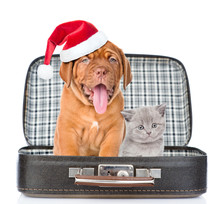Bordeaux Puppy In Red Christmas Hat And Gray Kitten Sitting Together In A Bag. Isolated On White Background