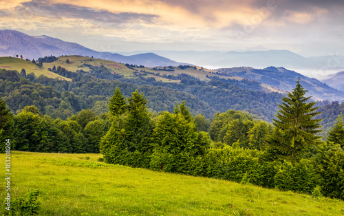 Deurstickers Zalm green meadows and forest of the Carpathians. beautiful landscape in mountains at purple sunrise in summer