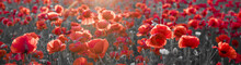 Panorama With Red Poppies, Sel...