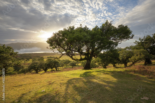 Mystic Green: bajkowy las na Maderze