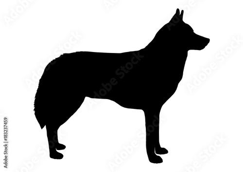 Valokuva Wolf Silhouette