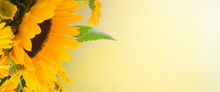 Flowers Garden With Sunflowers And Calendula Flowers Close Up Banner