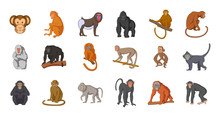 Monkey Icon Set, Cartoon Style