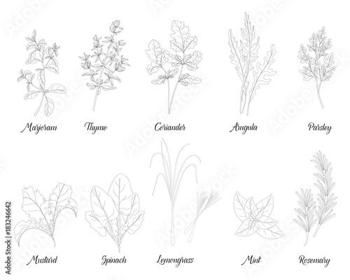 Fototapeta herbs and spices for cooking obraz na płótnie