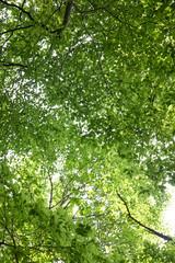金剛山の新緑