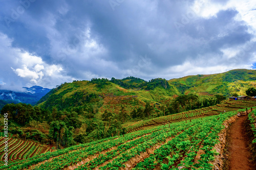 Poster Rijstvelden high mountains peaks range clouds in fog scenery landscape national park view outdoor at Doi Ang Khang, Chiang Mai Province, Thailand