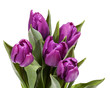 Bouquet of blooming spring flowers violet tulips on white background