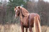 Fototapeta Konie - Draft horse