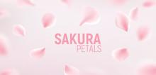 Pink Sakura Petals Falling Flower Vector Background. Romantic Blossom Sakura Flower Petals