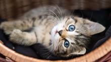 Kleine Katze Kuschelt Im Körbchen