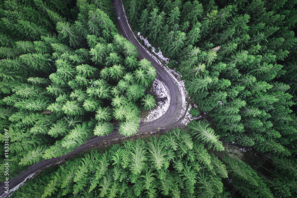 Fototapety, obrazy: Empty road in a forest from a drone