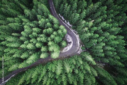 pusta-droga-w-lesie-od-trutnia
