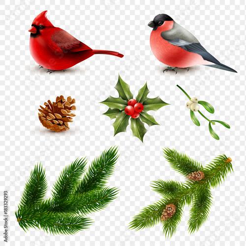 Fotografering  Winter Birds Fir Branches Set