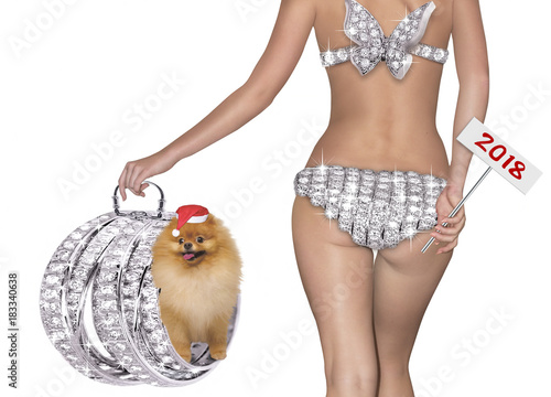 Christmas concept with a girl and a small dog Pomeranian Pomeranian Poster