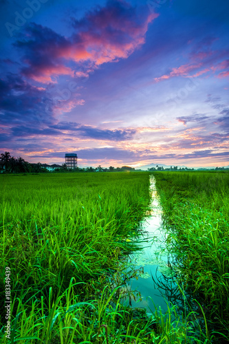 scenery of sunset at paddy field in Penang,Malaysia. Soft Focus,blur due to long exposure. Visible noise due to high ISO.