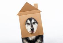A Dog With Cardboard House On ...