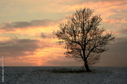 Poster Taupe Lonely Tree at Sunset