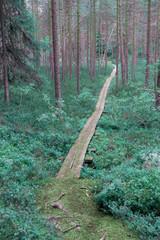 FototapetaFantasy colored forest. Purple tone corrected image.