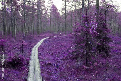 Fototapety fioletowe   fioletowe-drzewa