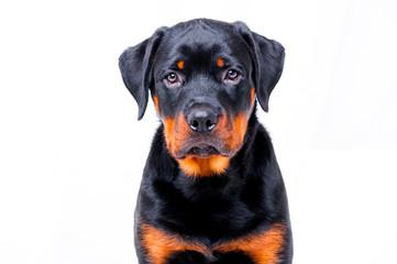 Portret śmieszny pies
